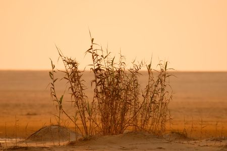 clump: Isolated clump of shrubs at sunrise Stock Photo