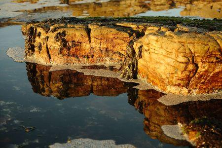 glistening: Rock reluciente en la piscina de roca con mariscos y algas