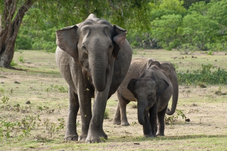 An elephant family Stock Photo