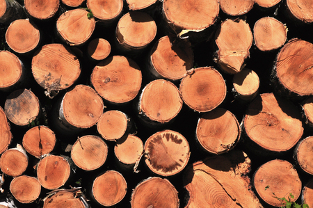 pile of logs: Wooden logs stacked in a pile Stock Photo