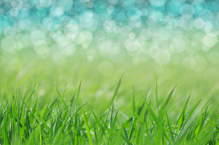 background  grass: Natural defocused background - grass and water. Spring or holiday by a lake.