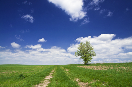 Rural path in the fields - natural landscape background