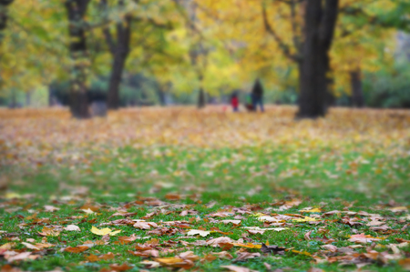 Seasonal blurred background - autumn in the park.