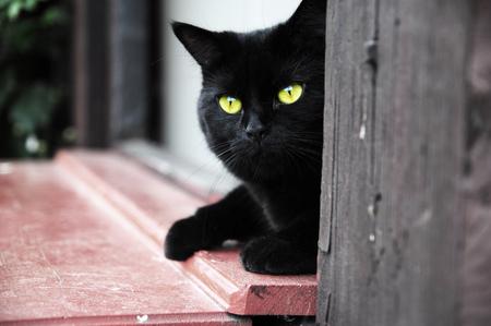Black cat with yellow eyes lying in the door