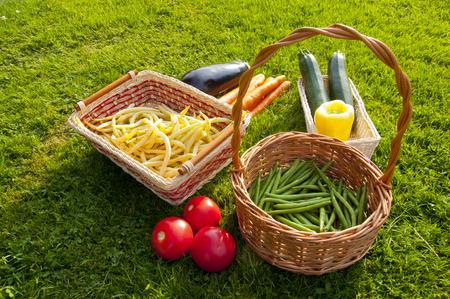 Freshly harvested home grown vegetables lying on grass - beans, tomatoes, pepper, carrots, aubergine, zucchini Stock Photo