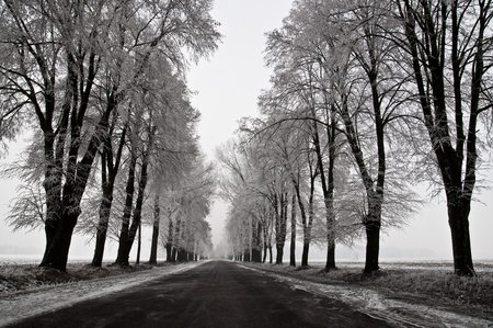 Country road on a frosty day - monotone winter landscape
