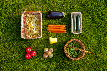 Freshly harvested home grown vegetables lying orderly on grass - beans, tomatoes, pepper, carrots, aubergine, zucchini, onions Stock Photo