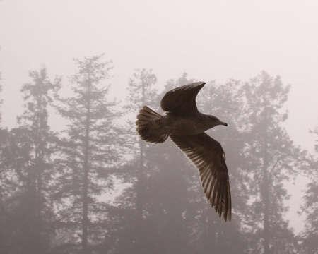 Sea gull in the fog