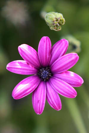 Fleur pourpre Banque d'images - 5000047
