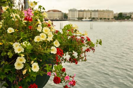 Colorful flowers at Geneva lake in Switzerland