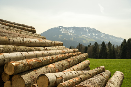 Pile of logs near hiking trail in Entlebuch biosphere reserve, Switzerland Archivio Fotografico