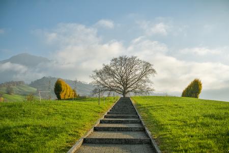 Short path leading towards dominant tree in small cemetery near Kussnacht am Rigi in Switzerland