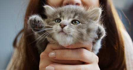 Close up of cute kitty in womans hands waving its paws. Pretty woman holding a cat closely to the camera. Indoor