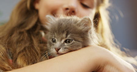 Close up of a cute kittys muzzle and a little girl on the blurred background behind. Portrait
