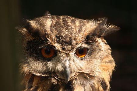 Eagle Owl Stock Photo - 3273295