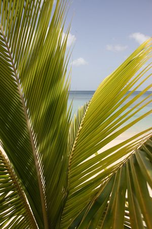 Looking at the ocean through the leaves of a palm tree