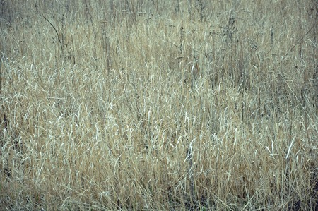 portugal agriculture: field of dry grass serenity silence solitude Stock Photo