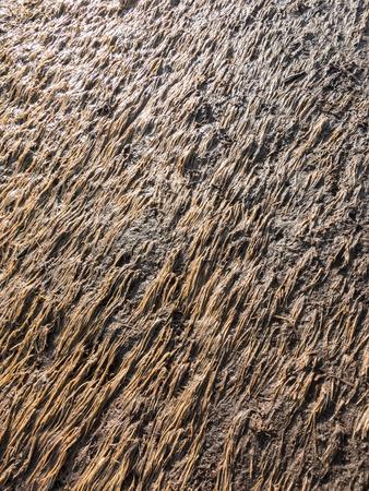 muddy: Grass laid down on muddy ground
