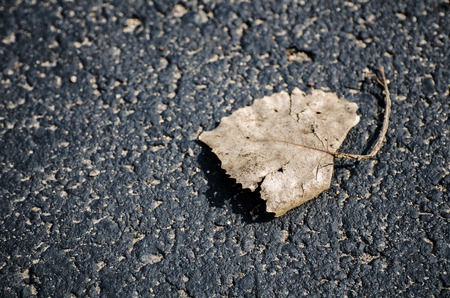 One dry leaf lying on the road on bright sunny day photo