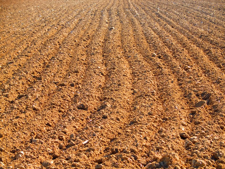 Brown soil ploughed field in spring photo