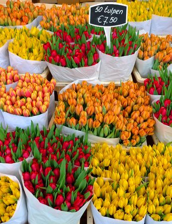 shop display: Colorful tulips on sale in Amsterdam flower market
