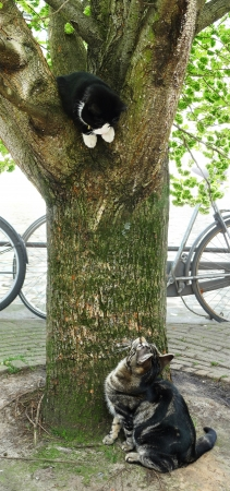 pussy tree: Two playful cats and a tree. One on it, one below and staring at each other. Stock Photo