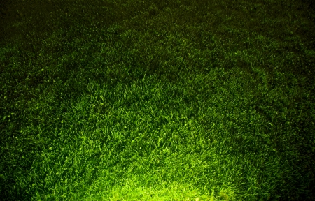 Dark contrasted green grass background. Top view and hard spot light from the bottom. Stock Photo - 14399046