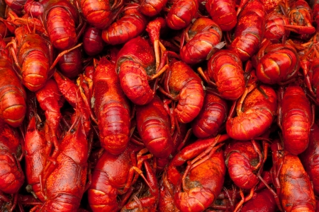 crawfish: Many red lobster for sale in a market in Shanghai