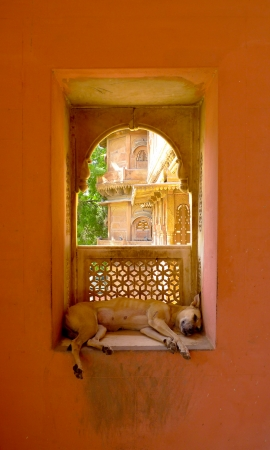 bikaner: Stray dog resting on a window in a Bikaner palace, Rajasthan, India