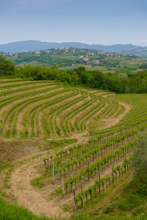 vine country: Vineyards on the hills in Collio area near Cormons, in the wine region of Friuli, Italy