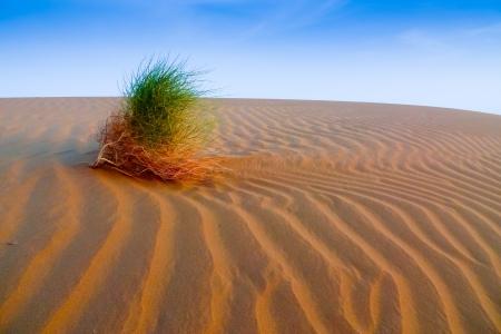 erosion: Desert plant struggling for survival in the sand