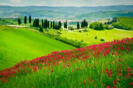 Colline couverte de fleurs rouges donnant sur une route bordée de cyprès sur une journée ensoleillée près de Certaldo, Toscane, Italie