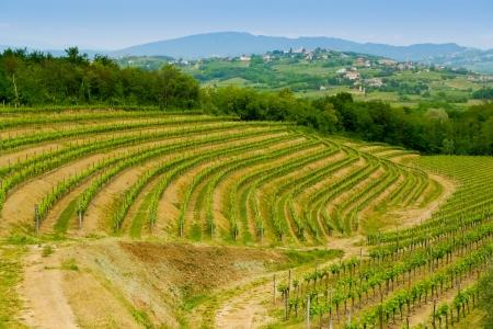Weinberge auf den Hügeln in Collio in der Nähe Cormons, in der Weinregion Friaul, Italien Lizenzfreie Bilder
