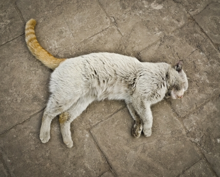 vagabond: Odd multicolored chinese stray cat relaxing on an old pavement