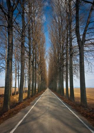 infinity road: Long straight road lined by high trees in winter near Torviscosa, Friuli, Italy