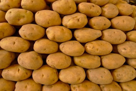 agriculture india: Neatly stacked potatoes in a  market in Jodhpur, Rajasthan, India