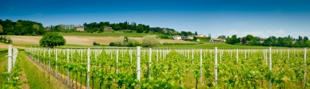 Weinberg und Weinkeller Panoramablick im Frühjahr der Nähe von Udine, Friaul, Italien