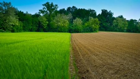 grooves: Newly ploughed wheat field in Italy, half and half Stock Photo