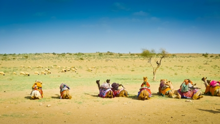 saddle camel: Camels sitting in the desert near Jaisalmer, Rajasthan, India