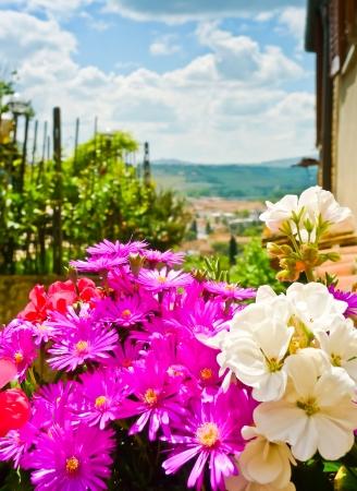 magenta decor: Closeup of a floral decoration in the streets of Certaldo, Tuscany, Italy (Drosanthemum floribundum and Geranium)