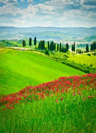 Hill von roten Blumen mit Blick auf eine Straße abgedeckt gesäumt von Zypressen an einem sonnigen Tag in der Nähe Certaldo, Toskana, Italien Lizenzfreie Bilder - 18910349