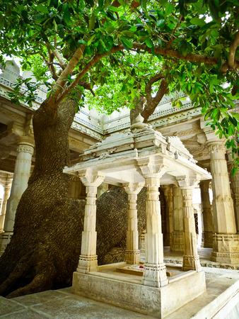 Baum in Ranakpur Jain Tempel, Rajasthan, Indien