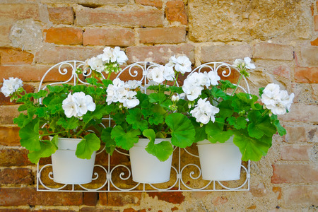 Closeup view of white flowers vases hung on a wall in Monteriggioni, Tuscany, Italy