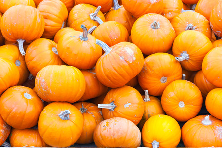 A bunch of small bright orange pumpkins for sale in Innsbruck, Tirol, Austria