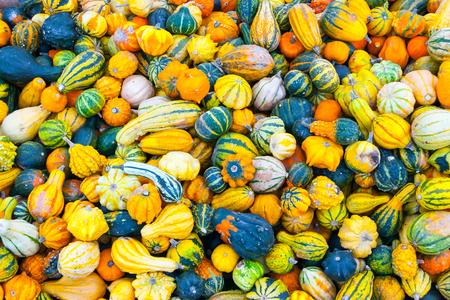 A bunch of small pumpkins for sale in Innsbruck, Tirol, Austria Stock Photo
