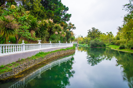 Russia city of Sochi Adler district park Southern cultures. Pond with reflection of trees
