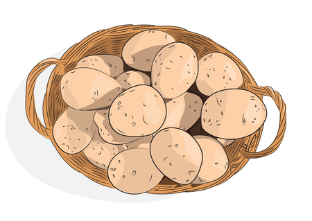 Basket with potato tubers on a white background. Vector illustration. Banque d'images - 100427022