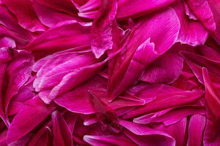 Pink background of peony petals.