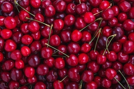 Close up of pile of ripe cherries with stalks. Large collection of fresh red cherries. Ripe cherries background.