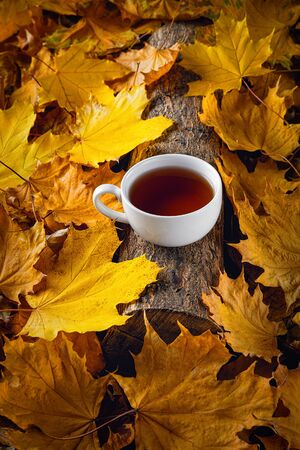 Mug of tea, autumn leaves, beautiful autumn composition with teacup. autumn forest, tea time. Concept of fall season. Stock Photo